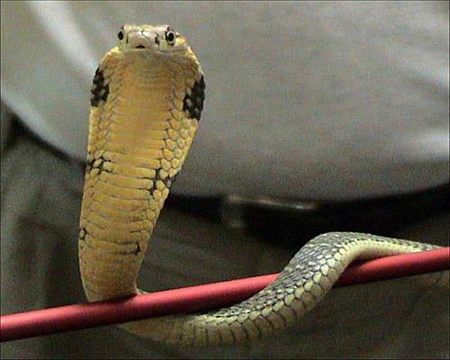 Dreams Decoded: Seeing snake in dream, auspicious or inauspicious - Part - 5, saanp ke sapne, #ekaansh, #ekaanshastro, ekaansh blog post, ekaansh, ekaansh astro
